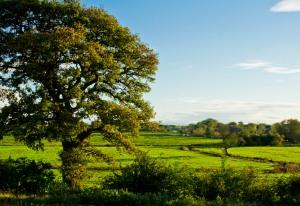 The Hawks Tree