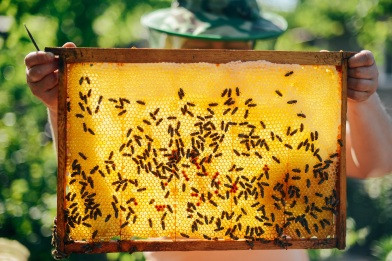 Wild Worlds Festival at Chester Zoo will feature The Natural Honey Bee Garden by artists Kerry Morrison and Helmut Lemke_2_small
