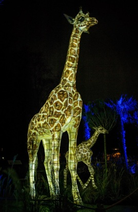 Tickets have gone on general sale for Chester Zoo_s annual Christmas event, The Lanterns (12)