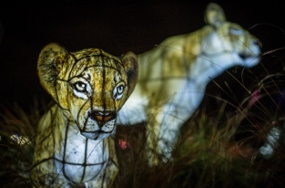 Tickets have gone on general sale for Chester Zoo_s annual Christmas event, The Lanterns (14)