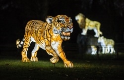 First peek_The Lanterns 2018 at Chester Zoo (2)
