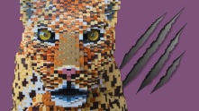 a new lego big cats exhibition is set to open at chester zoo in feburary (3)