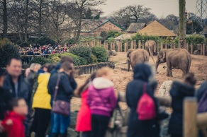 A record 1.97m people visited Chester Zoo last year, new figures reveal.