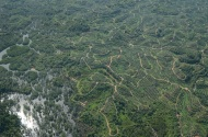Oil palm plantations from above_South East Asia (c) Marc Ancrenaz
