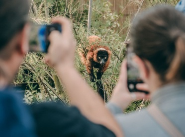 Chester Zoo puts its success down to new innovative habitats like its brand new Madagascan lemur walkthrough exhibit (12)